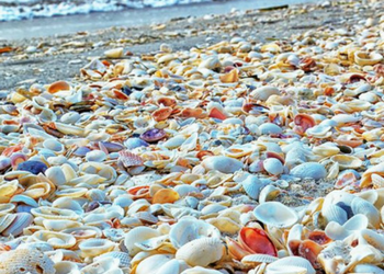 Beaches & Islands to Pick Up Shells Around Sarasota, Florida BLVD SArasota