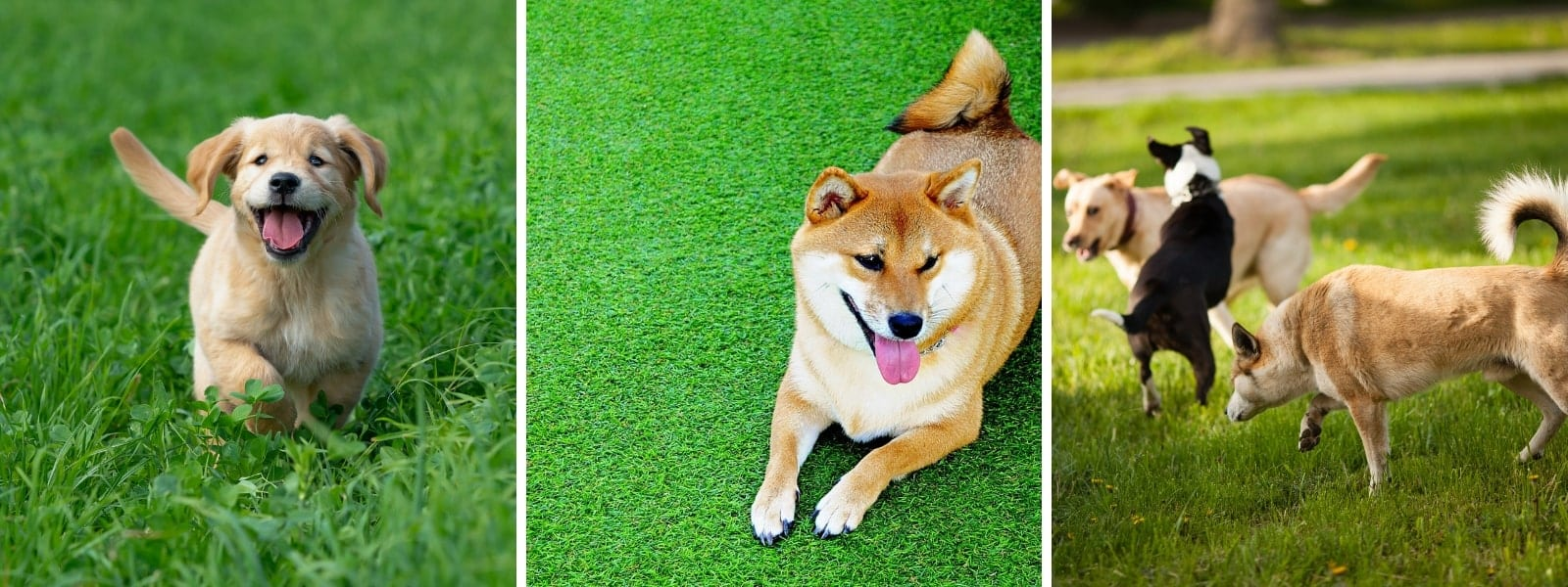 Sarasota Dog Parks