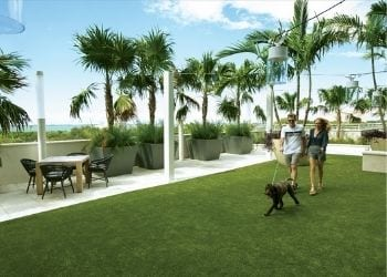 See Why BLVD Sarasota is Pawsitively Pet Friendly BLVD SArasota